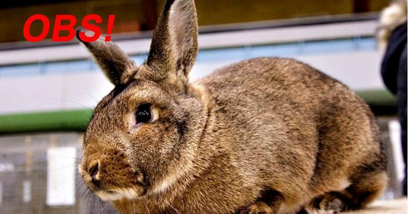 OBS - Ingen kaniner på årets Gelsted Marked